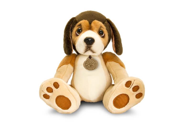 Tri-Coloured Beagle